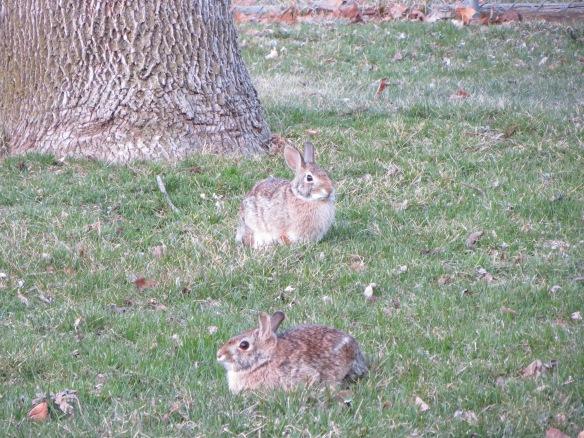 Day 614: Bunnies