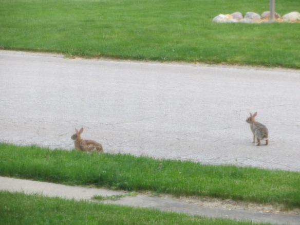 Day 693: Bunnies